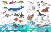 Zvířata, kam se podíváš